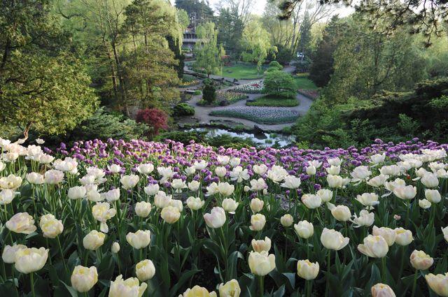 OCUF   Royal Ontario & Royal Botanical June 8th